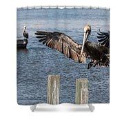 Brown Pelican Touchdown Shower Curtain