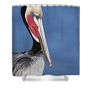 Brown Pelican Portrait Shower Curtain