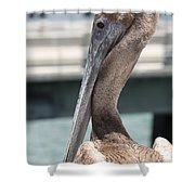 Brown Pelican Portrait Shower Curtain