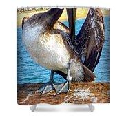 Brown Pelican Preen  Shower Curtain