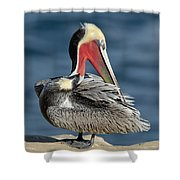 Brown Pelican Preening Shower Curtain