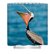 Brown Pelican Showing Pouch Shower Curtain