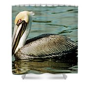 Brown Pelican Swimming Shower Curtain