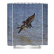 Brown Pelican - Triptych Shower Curtain