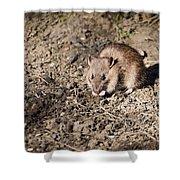 Brown Rat Shower Curtain
