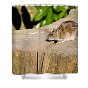 Brown Rat On Log Shower Curtain