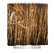 Brown Reeds Shower Curtain
