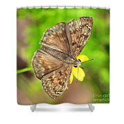Brown Skipper Butterfly Square Shower Curtain