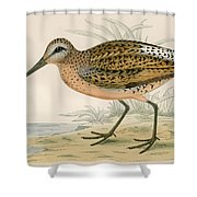 Brown Snipe Shower Curtain