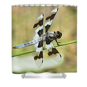 Brown Striped Double Winged Dragonfly Shower Curtain