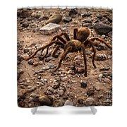 Brown Tarantula Shower Curtain