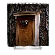 Brown Thrasher Feeding Time Shower Curtain