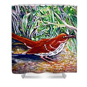Brown Thrasher In Sunlight Shower Curtain
