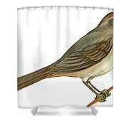 Brown Towhee Shower Curtain by Anonymous