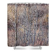 Brown Winter Forest With Bare Trees Shower Curtain
