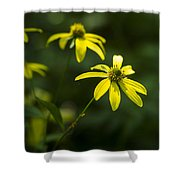 Browneyed Susan Shower Curtain