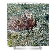 Brownstripe Octopus Burying Itself Shower Curtain