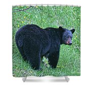 Browsing Black Bear Shower Curtain