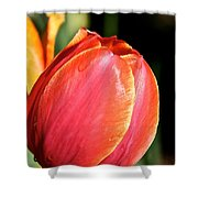 Brushstrokes By Tulip Shower Curtain