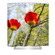Bryant Park Tulips New York  Shower Curtain