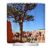 Bryce Canyon Pine Shower Curtain