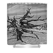 Bryce Canyon Tree Art Shower Curtain