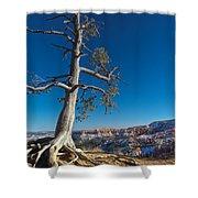 Bryce Tree Shower Curtain