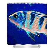 Bubbles - Fish Art By Sharon Cummings Shower Curtain