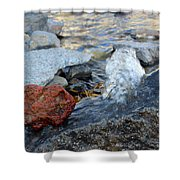 Bubbling Rocks Shower Curtain