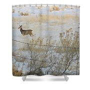 Buck And Doe Shower Curtain