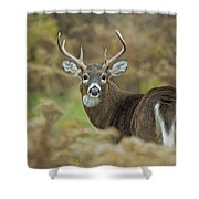 Buck Fever Shower Curtain