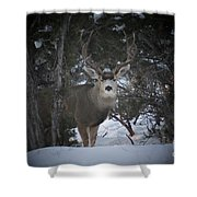 Buck I Shower Curtain