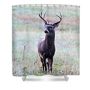 Buck Looking For A Doe Shower Curtain