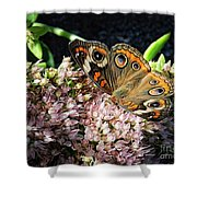 Buckeye Butterfly On Sedum Shower Curtain