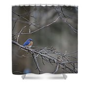 Budding Bluebird Shower Curtain
