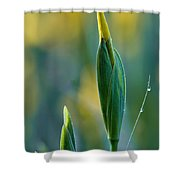 Budding Iris Shower Curtain