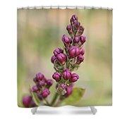 Budding Lilac 4 Shower Curtain