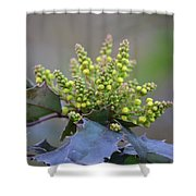 Budding Mahonia Shower Curtain