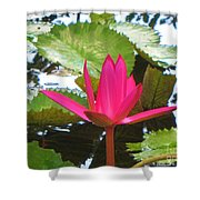 Budding Majesty  Shower Curtain