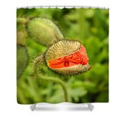 Budding Poppy Shower Curtain