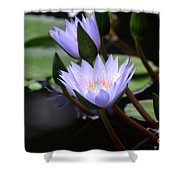 Budding Purple Water Lilies Shower Curtain
