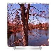 Budding Spring Tree Shower Curtain