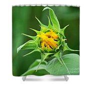Budding Sunflower Shower Curtain