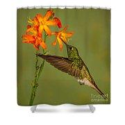 Buff-tailed Coronet Hummingbird No 1 Shower Curtain