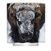 Buffalo #0057 Shower Curtain