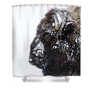 Buffalo   #0164 Shower Curtain