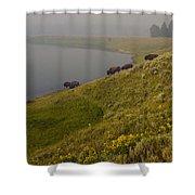 Buffalo   #0237 Shower Curtain