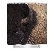 Buffalo   #0921 Shower Curtain