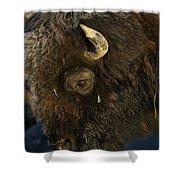 Buffalo   #5601 Shower Curtain