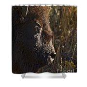 Buffalo   #9242 Shower Curtain